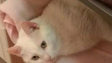 found-whitecat