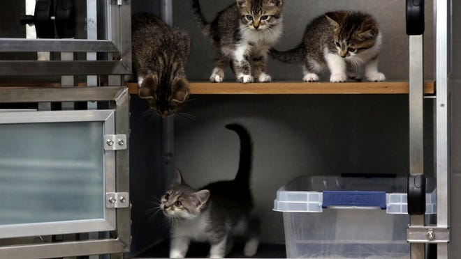New cat cages give felines more space to play and run during their stay the at Cleveland County Animal Shelter.