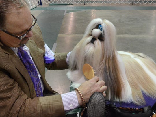 Luke Ehricht grooms Peter, his shih-tzu, at the Michigan Dog Show at Novi's Suburban Collection Showplace earlier this year.