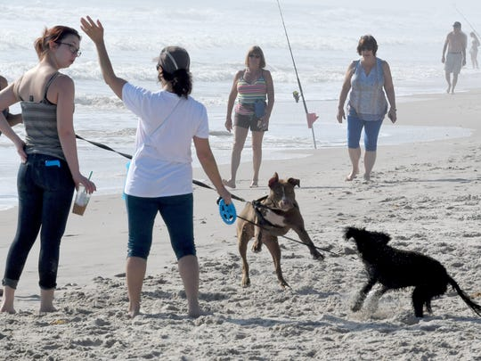Canine visitors -- running off-leash -- now are welcome on town beaches in Indian River Shores. Their owners, however, first need to complete a $50 license application.