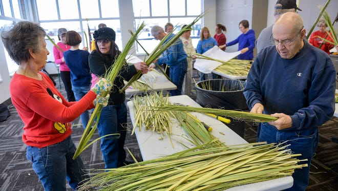 Parishioners Mickey and Rocky Spychala, near, join about 15 others as they work to strip palm fronds into small bunches of four to six fronds each in preparation for Palm Sunday masses Saturday morning, March 19, 2016, at Sacred Heart Parish in Sauk Rapids. The palms are ordered from growers in Texas in thick bundles that each must have their base chopped away and then split into the smaller groups of fronds. The process takes a group of volunteers just over an hour to finish. The fronds will supply the 1,200 or so parishioners who attend the church's three masses that begin the celebration of Holy Week.