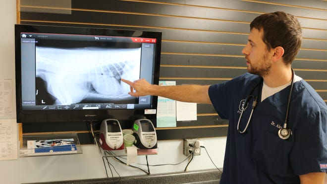 Dr. Alex de Roziere, of Harborview Animal Hospital, points out a respiratory complication from a local dog that recently contracted H3N2, a canine influenza virus.