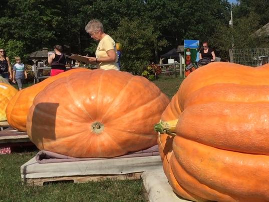 BUR20170923-giant-pumpkin-12.PNG