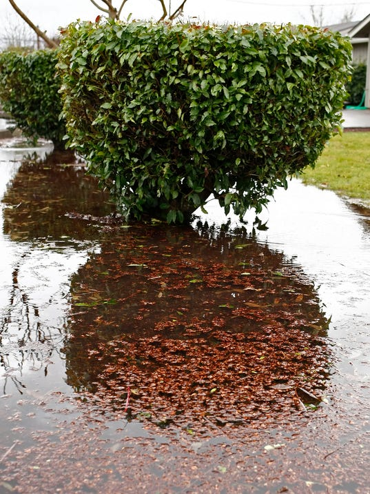 Simple actions help improve water logged soil - Plants can improve ambience home ...
