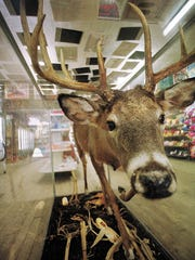 "In a file photo from 2001, a ""cornfield"" buck greets"