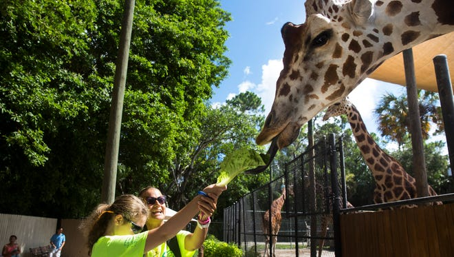 Sarah Hardwig, 14, and Nicole Shannahan, Director of the Lighthouse of Collier's summer camp, feed a giraffe during a field trip to the Naples Zoo at Caribbean Gardens on July 12, 2017.