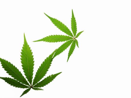 Two green marijuana leaves.