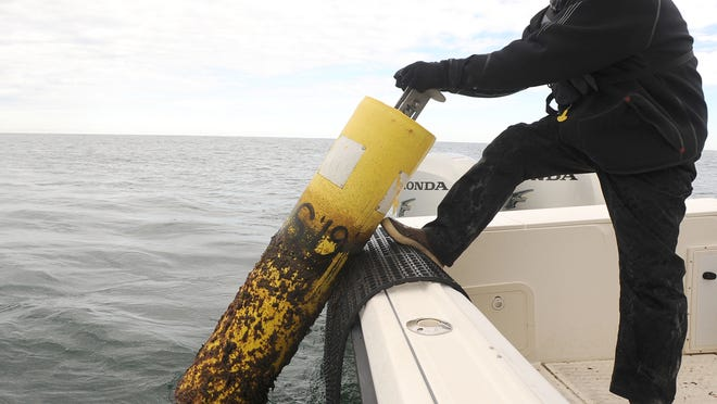 """Gregory Skomal,  shark researcher with the Division of Marine Fisheries, retrieves a detecting buoy from waters off the Outer Cape. Skomal and Atlantic White Shark Conservancy scientist Megan Winton have produced evidence that great whites spend half their time while off Cape Cod in water shallower than 15 feet. """"The shallow areas are very challenging for big fish like white sharks, and they have no reason to go in there unless they're feeding,"""" says Skomal."""