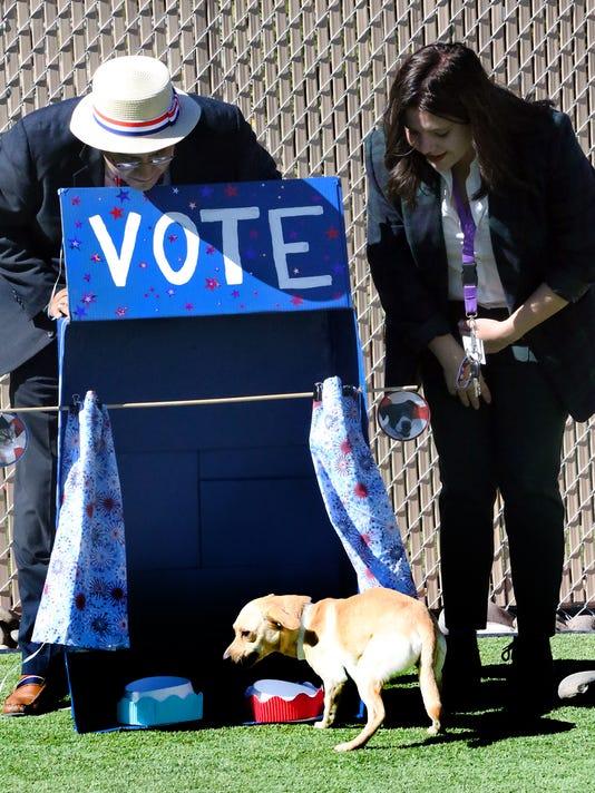 Dog-Vote-Main.jpg