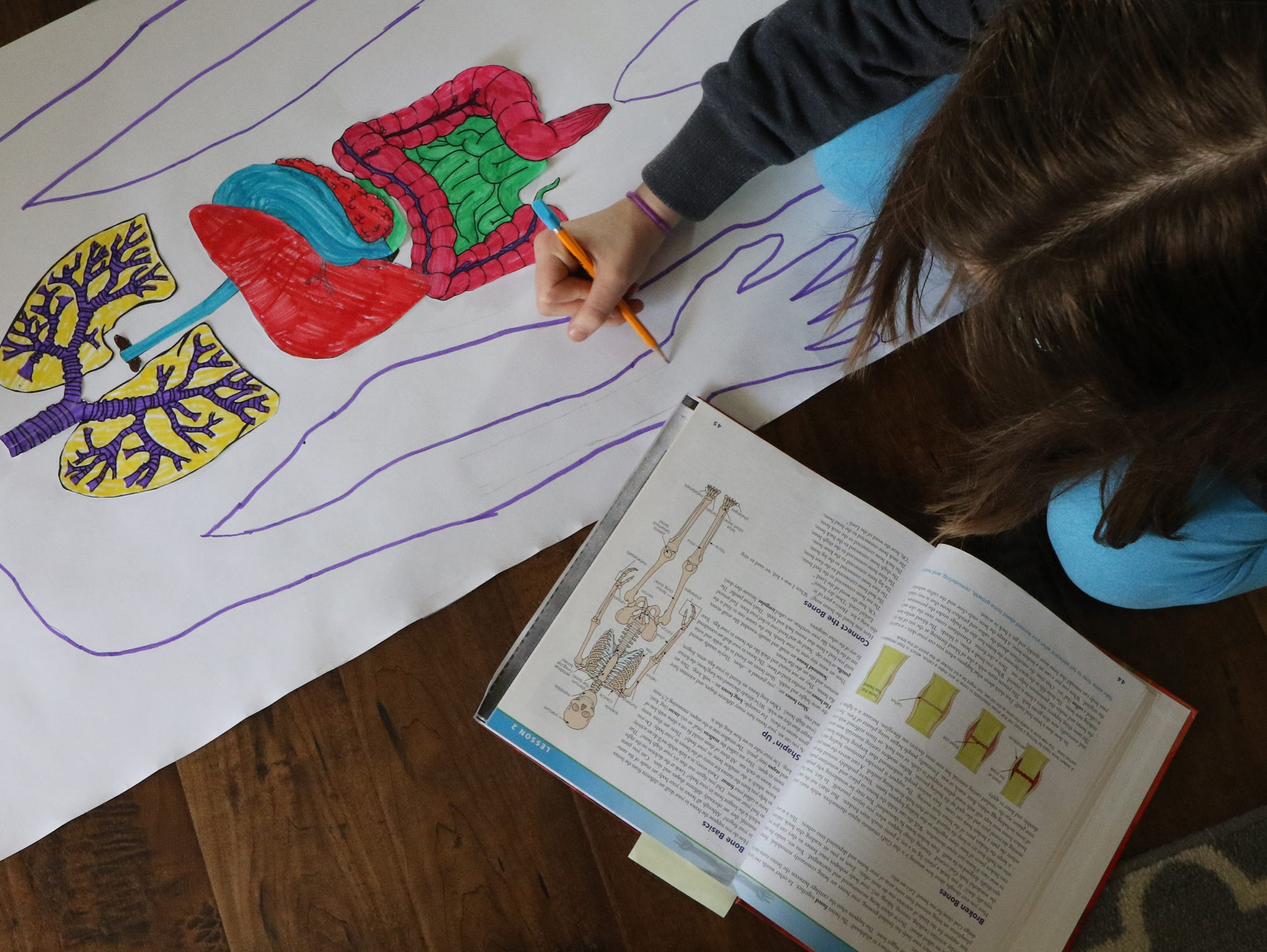 Ellie Boehm, 12, sketches the major bones of the body for a unit on human anatomy.