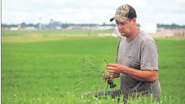 Farmer Wade Fischer, of Grenora, N.D., on July 4, 2019, scouts his durum crop.