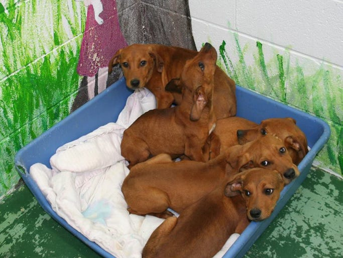 These five male puppies were discovered Friday morning