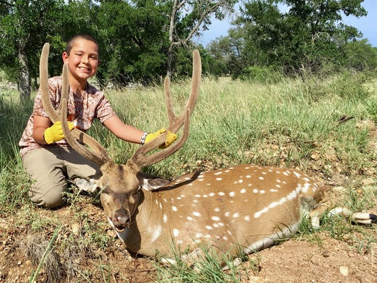 Drew Bonilla, 9, shot this nice axis buck while hunting with family on a ranch near San Saba on his ninth birthday.