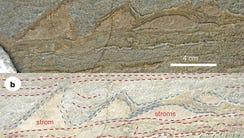Part of the specimen of stromatolites found in Isua,
