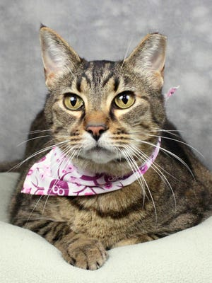 Idella is a playful cat looking for a good home.