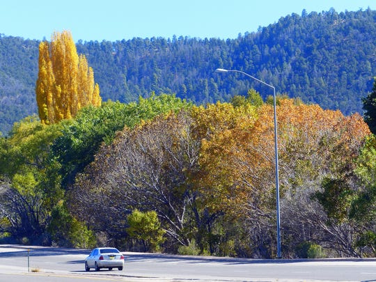 A crown of poplar gold signals the entrance to Mescalero from Tularosa.