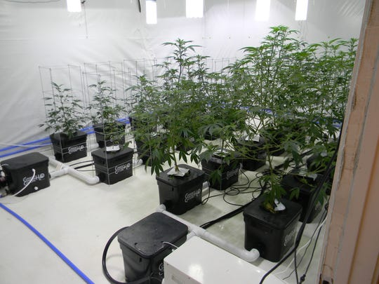 Police found several marijuana operations during raids which did not comply with the Medical Marijuana Act.