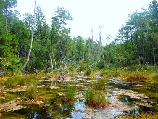 635926117408165306-Pemberton-property-wetlands-NJCF.jpg