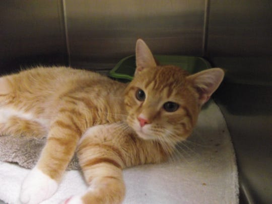 Reuben came into the shelter as a stray and is a very