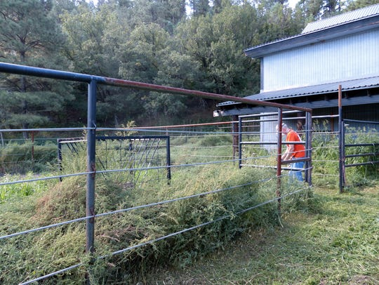 This volunteer prepares to tackle a pen overgrown with