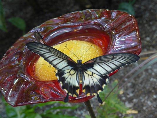 636111374863750547-Butterfly-on-flower-by-Juliana-Goodwin.jpg