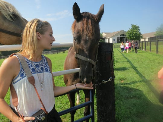 On a tour of Hagyard Equine Medical Institute in Lexington, Kentucky, visitors can feed horses kept as blood donors.