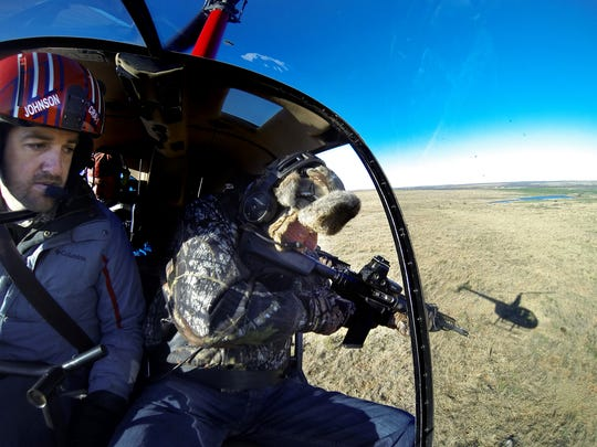Scott Buerge (right), from Nevada, Missouri, takes aim at a feral hog as Cedar Ridge Aviation owner/pilot Dustin Johnson, maneuvers his helicopter on Feb. 25 in Fisher County.