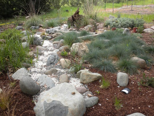 Colorful grasses add a splendid effect in the Wallaces' foothill garden landscape.