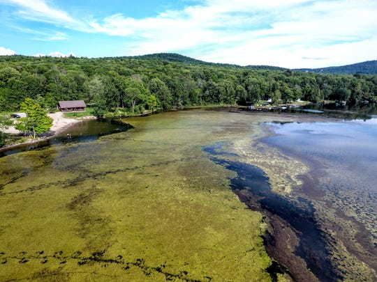 The summer of 2016, milfoil infestation choked off large sections around the a public boat launch and beach at Lake Iroquois, made worse by a dry summer that lowered the lake level.