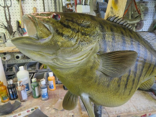 This finished replica of a trophy bass could pass as the real thing.