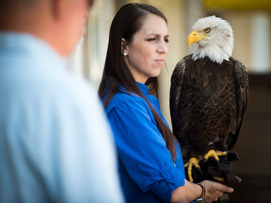 Challenger, a Bald Eagle, during a special ceremony on Tuesday, June 13, 2017, celebrating the installation of a livestreaming camera on a Bald Eagle nest adjacent to the Spectrum store and offices.
