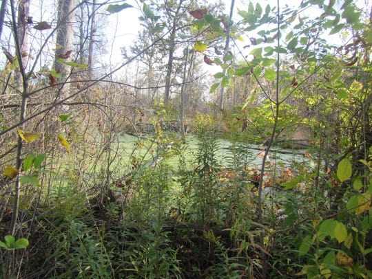 Vernal pools in the wet-mesic flatwoods forest on Belle