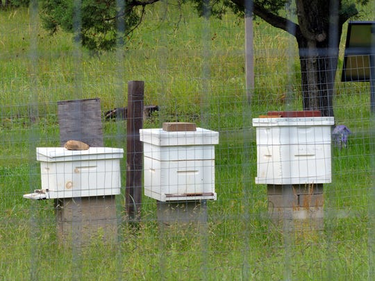 McClure keeps three hives at Smokey's Garden next to the Smokey Bear Ranger Station of the Lincoln National Forest.