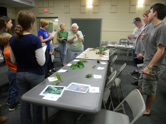 Master Gardeners assist the 4-H Plant Science and Horticulture