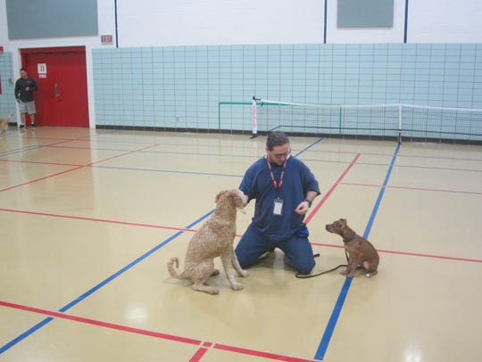 Dogs learn obedience through a partnership between