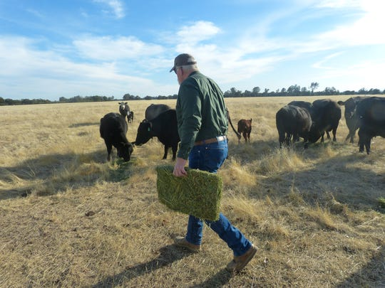 Dave Ault brings a bale of hay to his cattle at Stillwater Business Park.