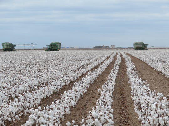 Last July, the Senate Appropriations Committee approved the FY18 Agriculture Appropriations Bill, which included a key provision regarding a cottonseed program.