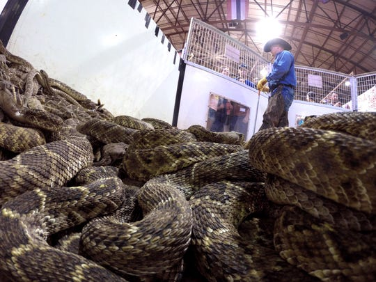 Crowds slither into Sweetwater for 60th annual rattlesnake
