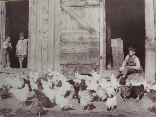 """Farm children looking after """"free range"""" chickens at"""