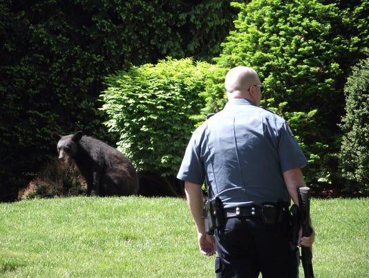 Midland Park Bear