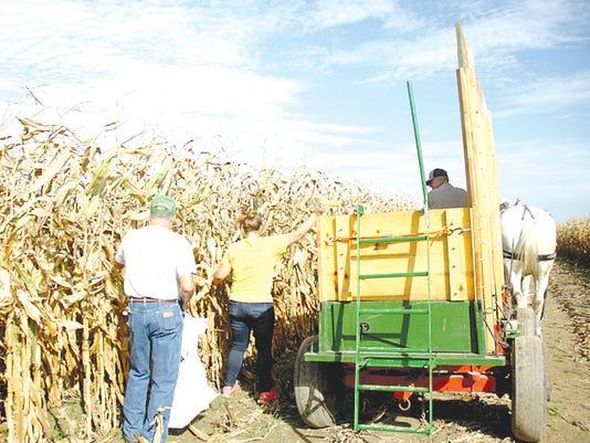 636456412899116026-corn-husking-2a.jpg
