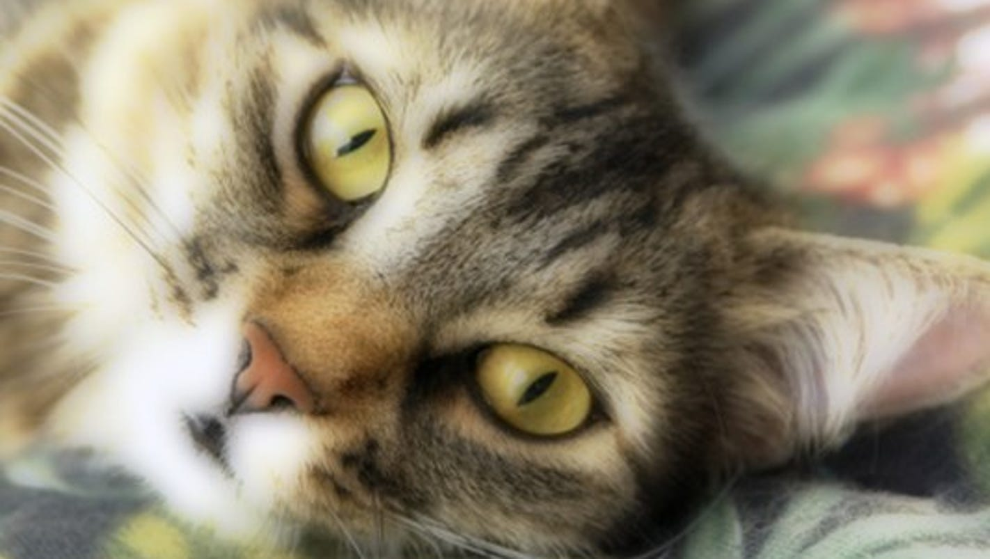 Special Kitty Cat Food Recall