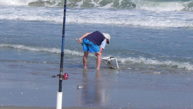 This surf fisherman is using a sand flea rake to snare the small mole crabs that make good pompano bait. The thumb-size sand fleas bury into the sand along the edge of the surf but they can be scarce during cold weather.