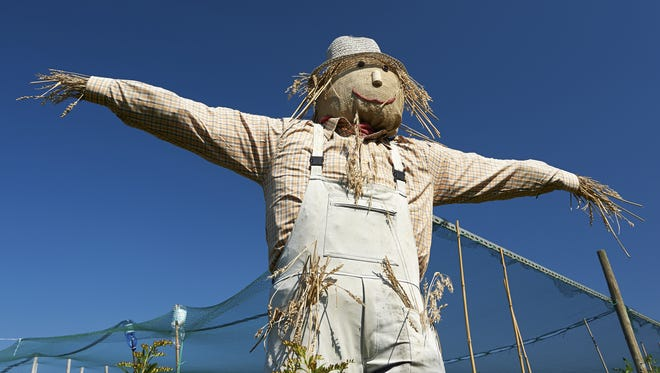 The community will be invited to vote for their favorite scarecrows around Hartland Township from Friday to noon Sept. 20.