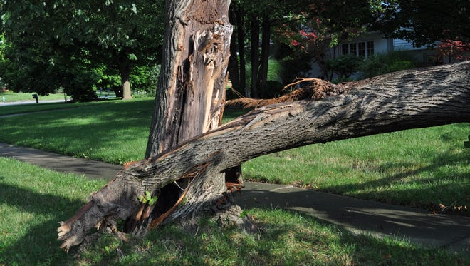 Storms and lightning can be devastating to trees.