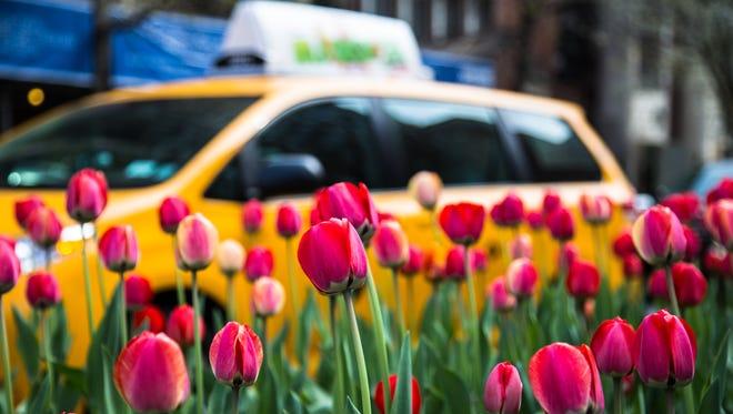 Springtime in New York event