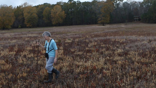 Joan Brown searches for birds during the annual Christmas Bird Count at D'Arbonne National Wildlife Refuge on Saturday, December 17, 2016. Brown and other birders who participate in the annual event identified a total of 84 different bird species in the area. This year's count was low due to the weather - birds lay low when it's windy because they can't hear or see predators well. In a normal year, the birders count between 95-103 total species of birds.