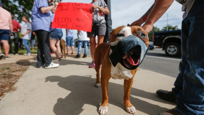 "Dozer stands on the sidewalk in front of city hall during the ""Don't Bully My Bully"" on August 25, 2017."