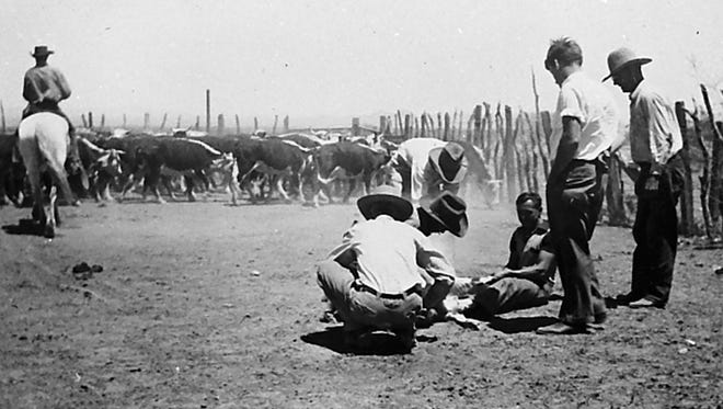 Branding young steers with the Sands LS mark in the 1930s at Manistee Ranch on the outskirts of Glendale. The property was sold off bit by bit over time, but cattle were fattened there until 1996.