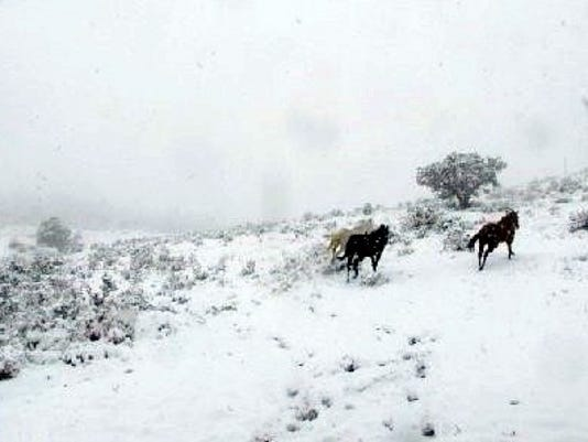 horses-running-in-snow
